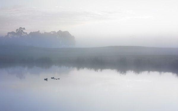 Ducks on a Misty Pond - Apple Wallpaper