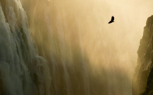 Eagle & Waterfall - Apple Wallpaper