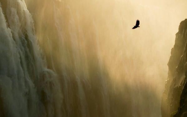 Eagle & Waterfall - Apple Wallpaper