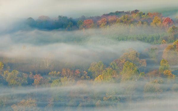 Forest in Mist - Apple Wallpaper