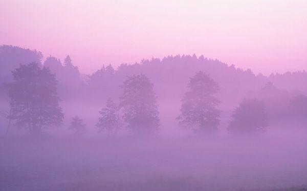 Pink Forest - Apple Wallpaper