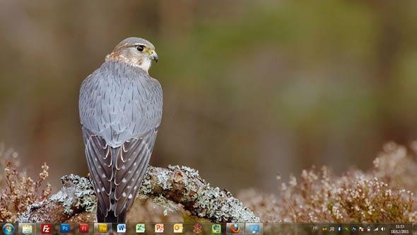 Capture d'écran - Rapaces, thème visuel officiel Windows 7