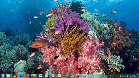 Capture d'écran - Poissons tropicaux, thème visuel officiel Windows 7