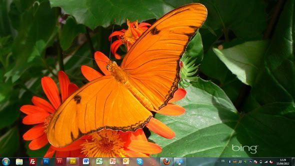 Capture d'écran - Concours photo des élèves sur le jour de la Terre Bing, thème visuel officiel Windows 7