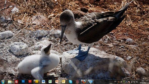 Capture d'écran - Iles Galapagos, thème visuel officiel Windows 7