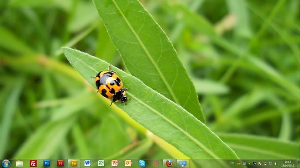 Capture d'écran - Insectes, thème visuel officiel Windows 7