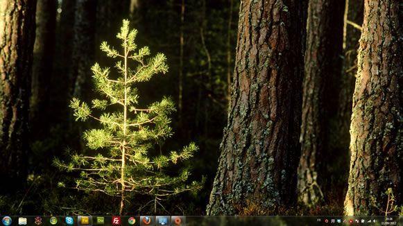 Capture d'écran - Jeunes arbres, thème visuel officiel Windows 7