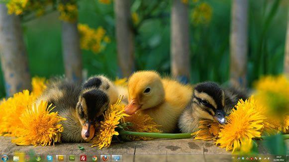 Capture d'écran - Canetons, thème visuel officiel Windows 7