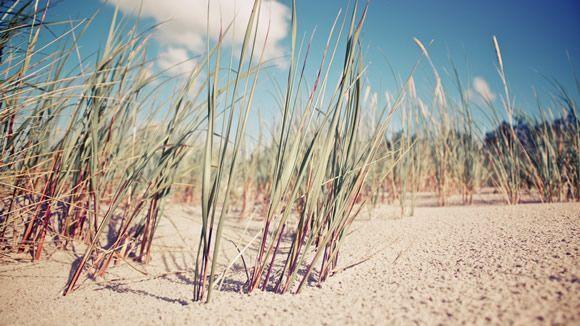 Fond d'écran - Sand