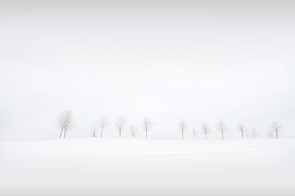 Fond d'écran - Winter Trees