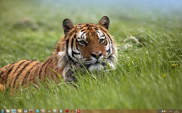 Capture d'écran - Thème Year of the Tiger pour Windows 7