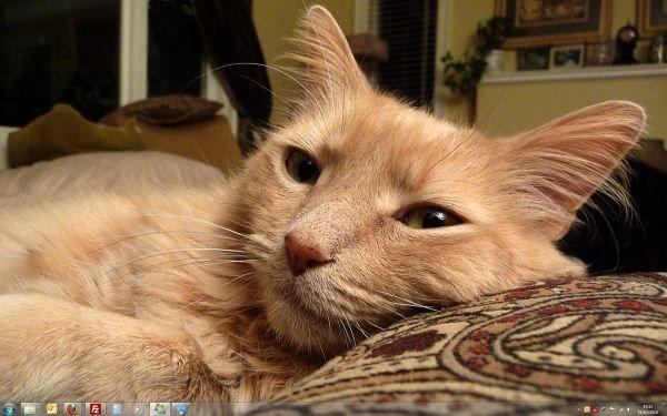 Capture d'écran - Thème Cats Anytime pour Windows 7
