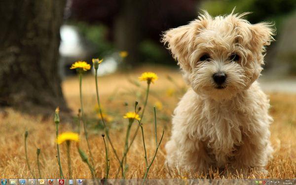 Capture d'écran - Thème Dogs in Winter pour Windows 7